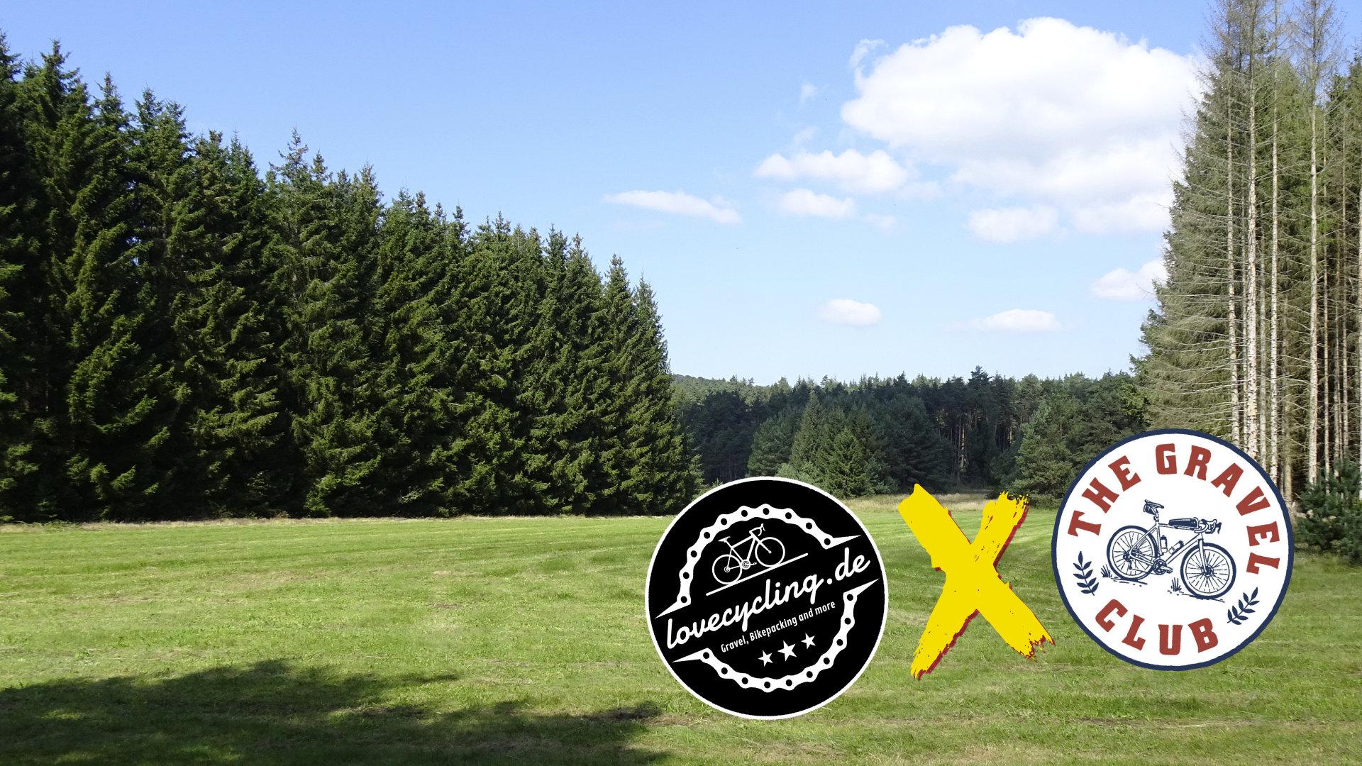 Bild einer Wiese im Wald. Rechts und links stehen mehrere Nadelbäume.